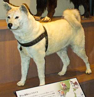 Photo of Stuffed Hachiko